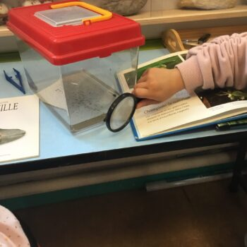 Activité observation - maternelle